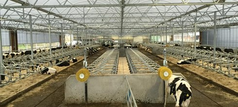 Cow Lounge for 240 dairy cows in Denmark